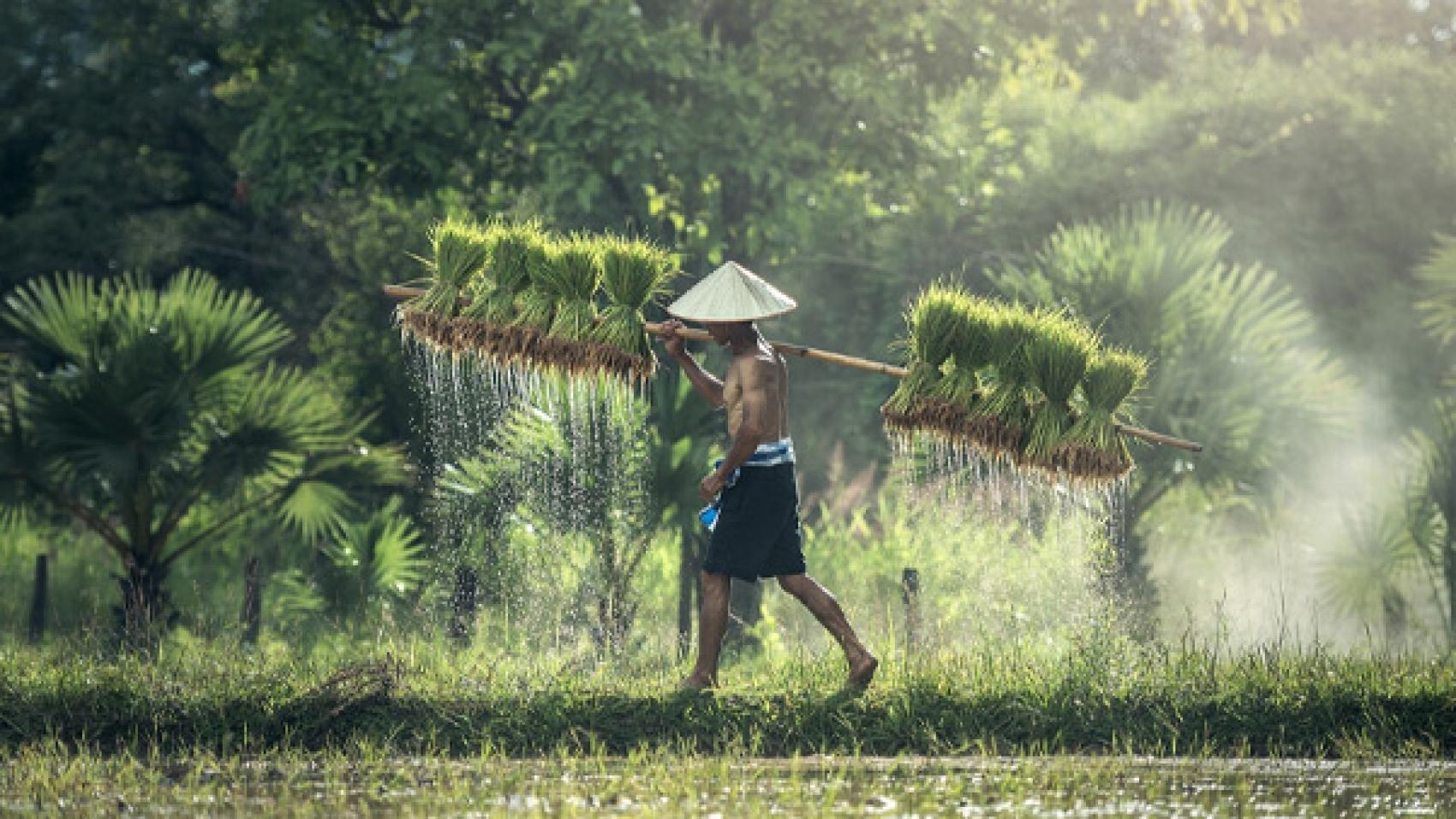 the-social-impact-of-microfinance-mfis-in-myanmar-banner
