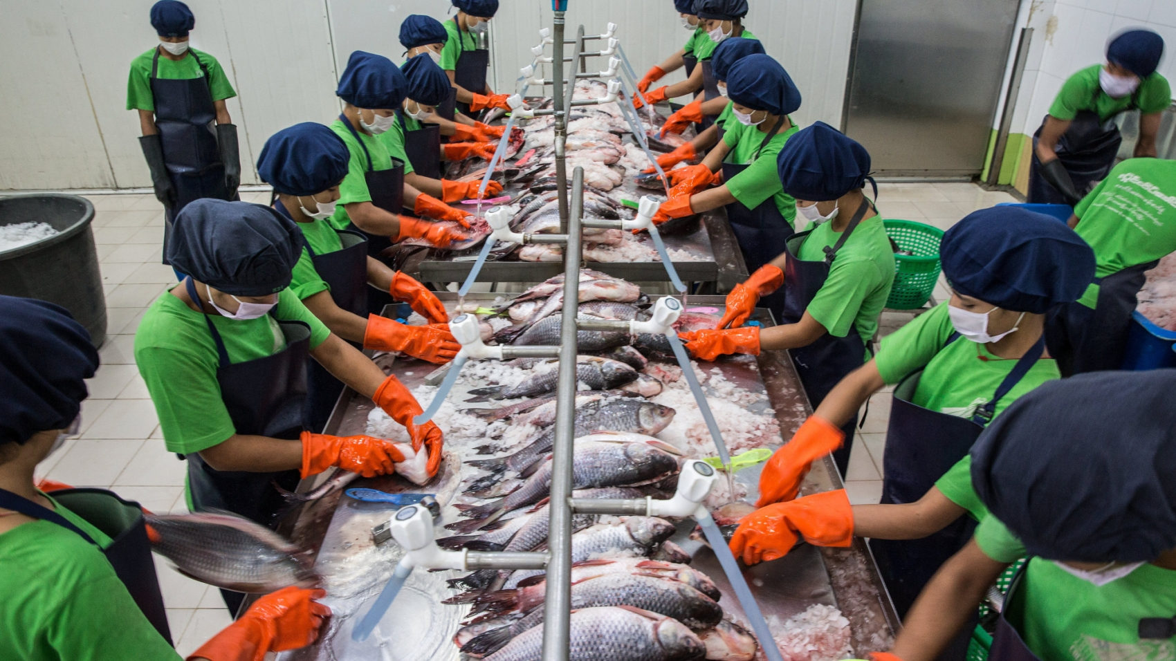 Employees clean and wash farmed fish at Hlaing Htate Khaung Cold Store in Yangon, Myanmar on August 29, 2018.  Photograph: Taylor Weidman/Bloomberg