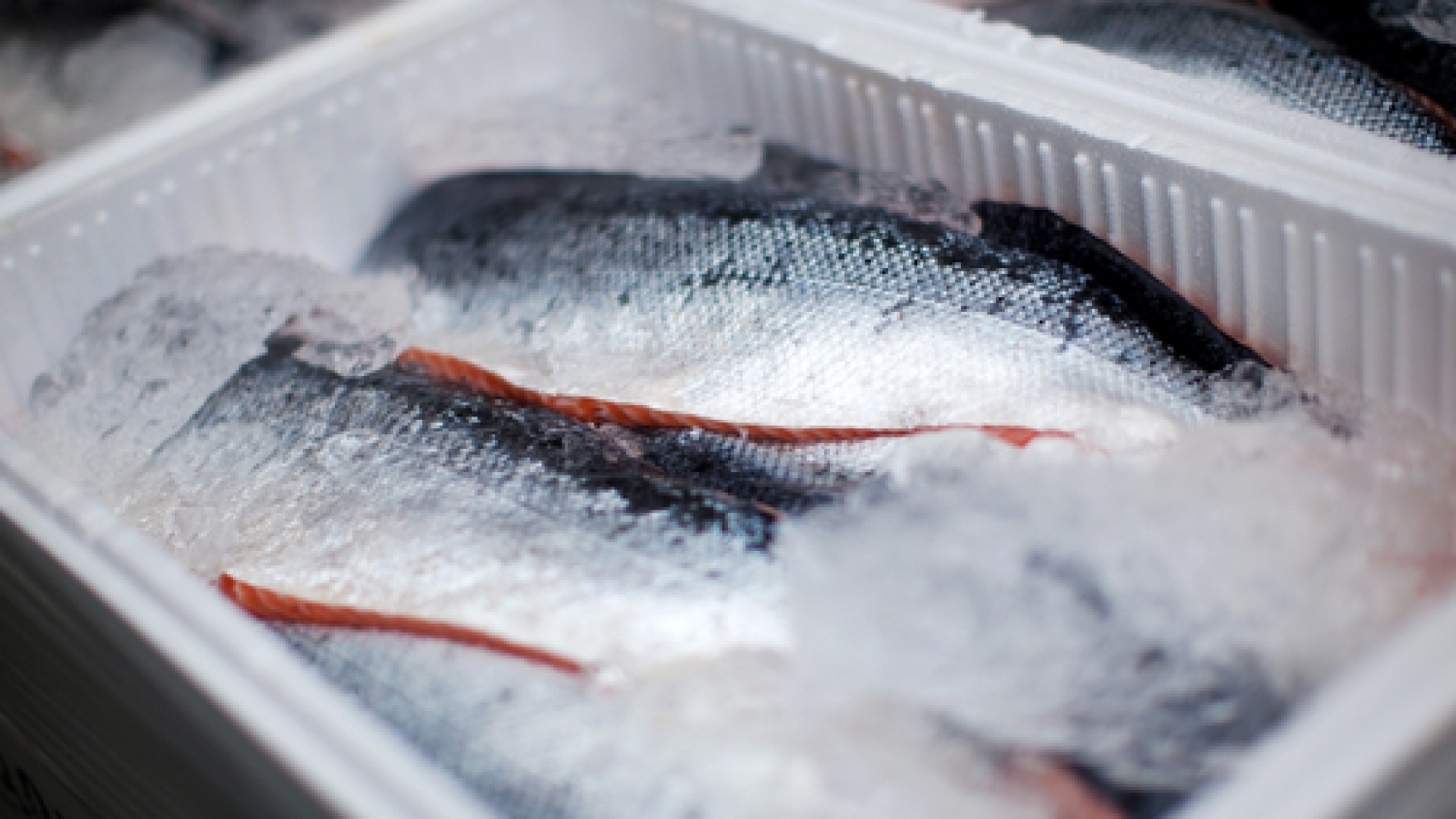 whole-salmons-lying-iced-transportation-box