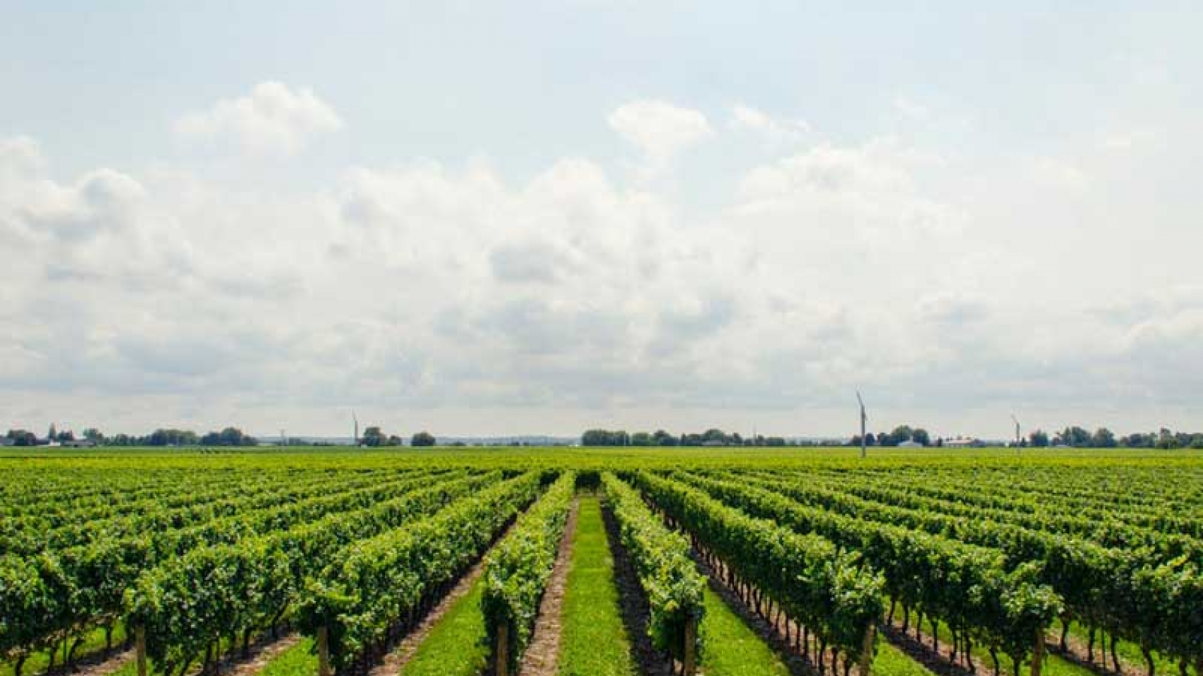 Local_Agriculture_5